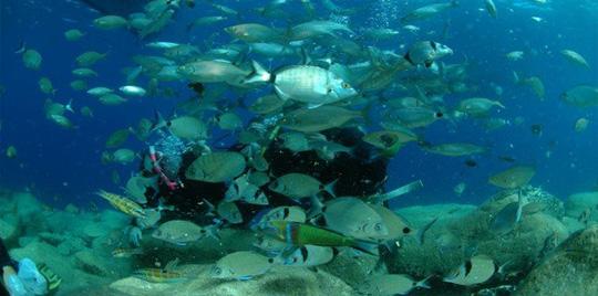 datcascuba - Diving